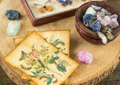 The Butterfly Collector – Butterfly Specimen Shadow Box and Rock Collection