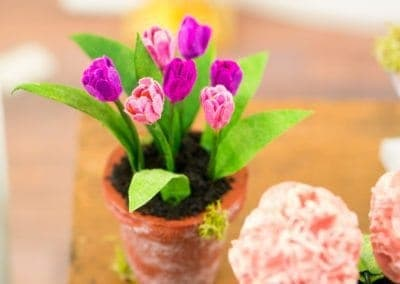 Potted Pink and Purple Tulips
